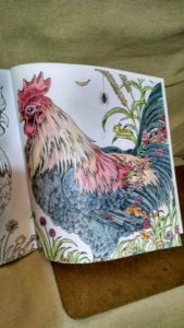 Coloring book rooster